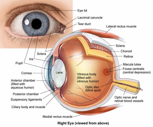 Eye Medical Terminology
